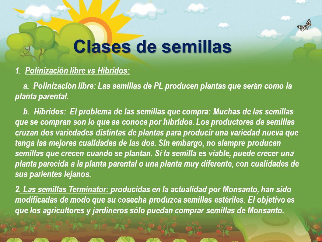 Clases de semillas 1. Polinización libre vs Híbridos: a. Polinización libre: Las semillas de PL producen plantas que serán como la planta parental. b.