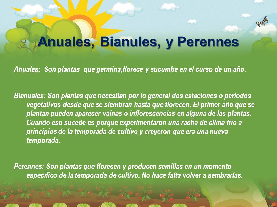 Anuales, Bianules, y Perennes Anuales: Son plantas que germina,florece y sucumbe en el curso de un año. Bianuales: Son plantas que necesitan por lo ge