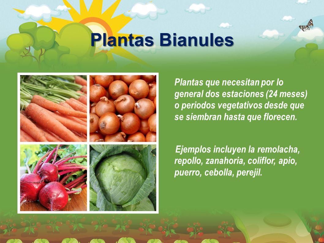 Plantas Bianules Plantas que necesitan por lo general dos estaciones (24 meses) o periodos vegetativos desde que se siembran hasta que florecen. Ejemp