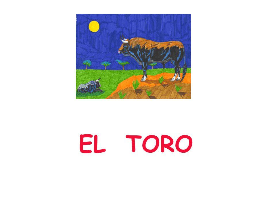 Un campesino tenía un toro reproductor, el mejor toro de la región.