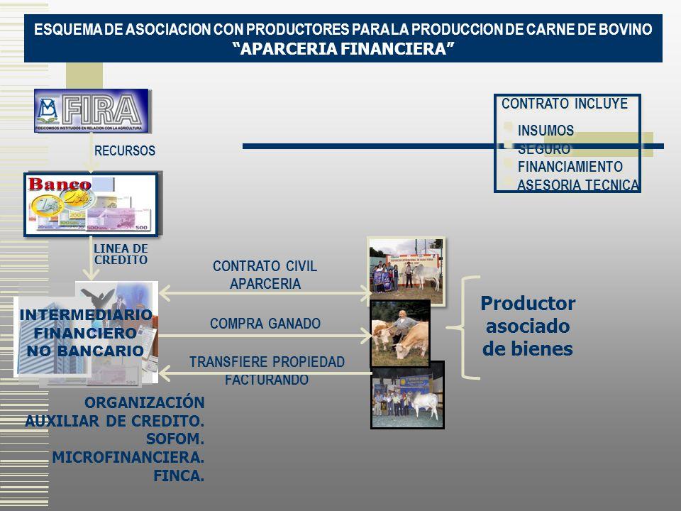 ESQUEMA DE ASOCIACION CON PRODUCTORES PARA LA PRODUCCION DE CARNE DE BOVINO APARCERIA FINANCIERA CONTRATO INCLUYE INSUMOS SEGURO FINANCIAMIENTO ASESOR