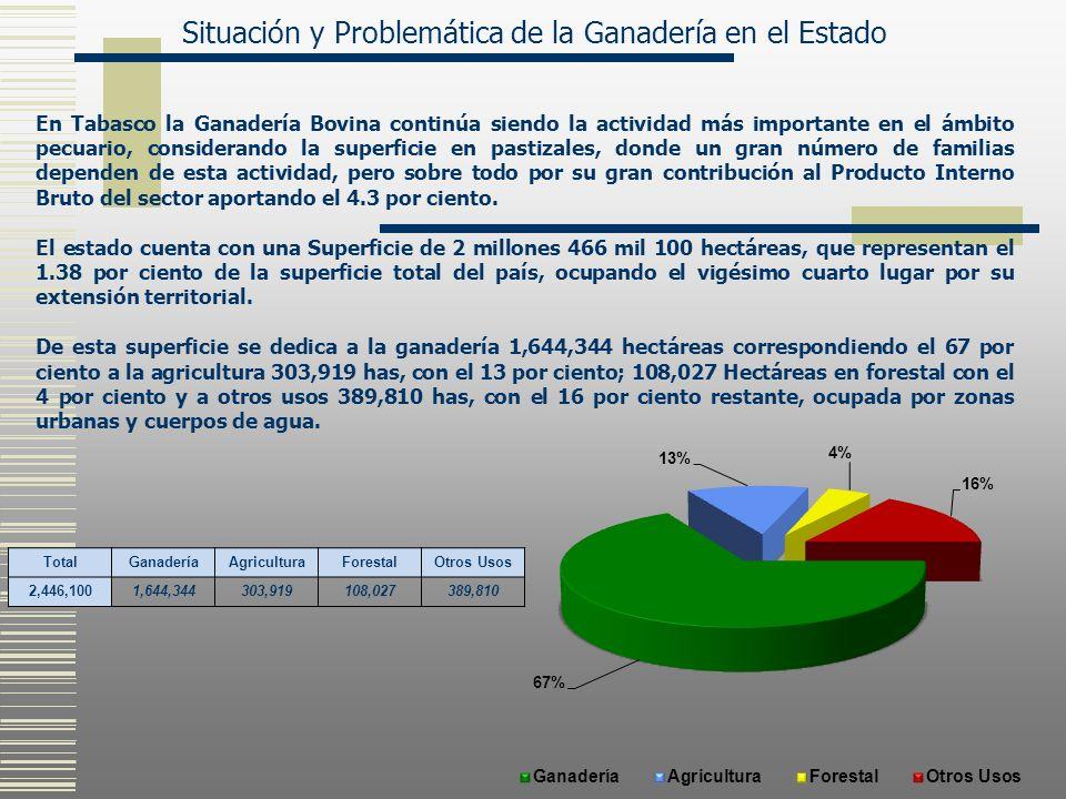 En Tabasco la Ganadería Bovina continúa siendo la actividad más importante en el ámbito pecuario, considerando la superficie en pastizales, donde un g