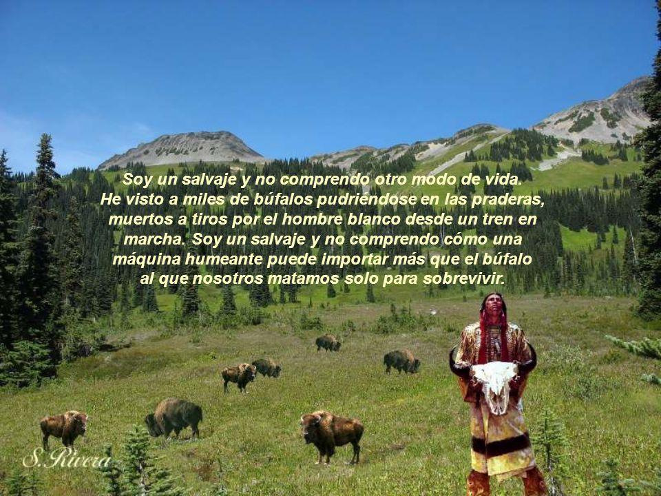 Y si les vendemos nuestras tierras, ustedes deben conservarlas como cosa aparte y sagrada, como un lugar donde hasta el hombre blanco pueda saborear e