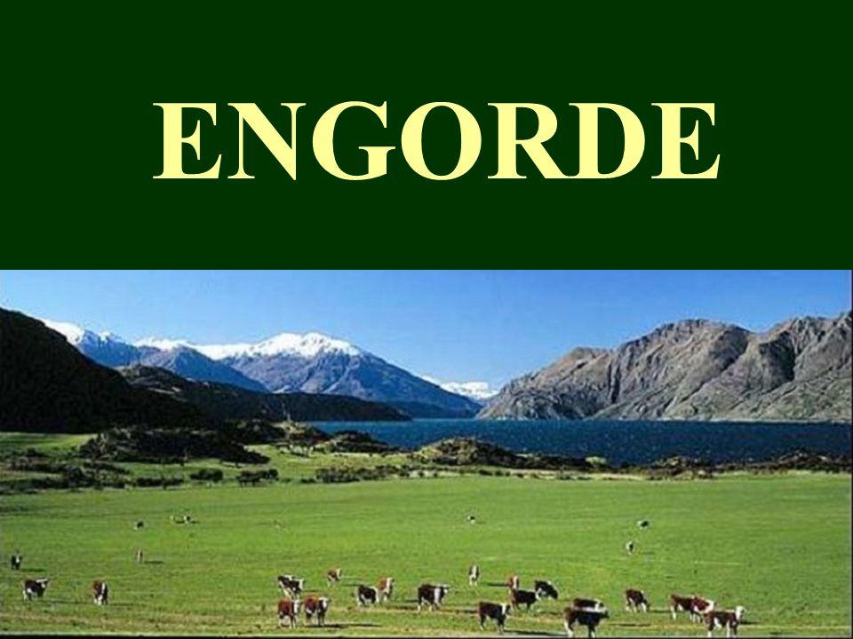 ENGORDE