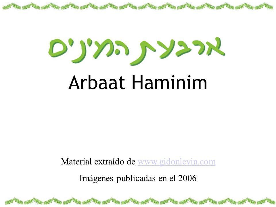 Arbaat Haminim Material extraído de www.gidonlevin.comwww.gidonlevin.com Imágenes publicadas en el 2006
