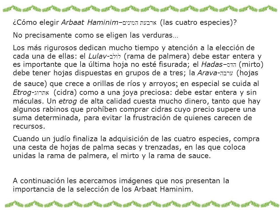 ¿Cómo elegir Arbaat Haminim– ארבעת המינים (las cuatro especies)? No precisamente como se eligen las verduras… Los más rigurosos dedican mucho tiempo y