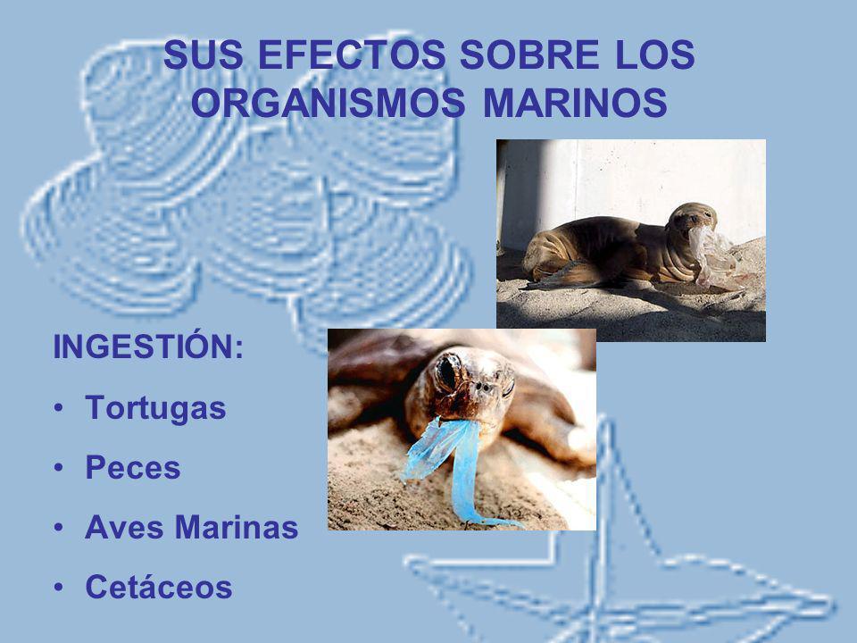 SUS EFECTOS SOBRE LOS ORGANISMOS MARINOS INGESTIÓN: Tortugas Peces Aves Marinas Cetáceos