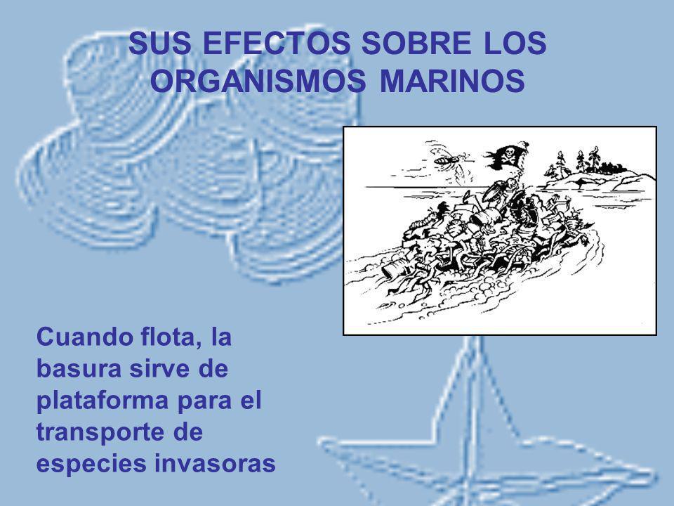 SUS EFECTOS SOBRE LOS ORGANISMOS MARINOS Cuando flota, la basura sirve de plataforma para el transporte de especies invasoras