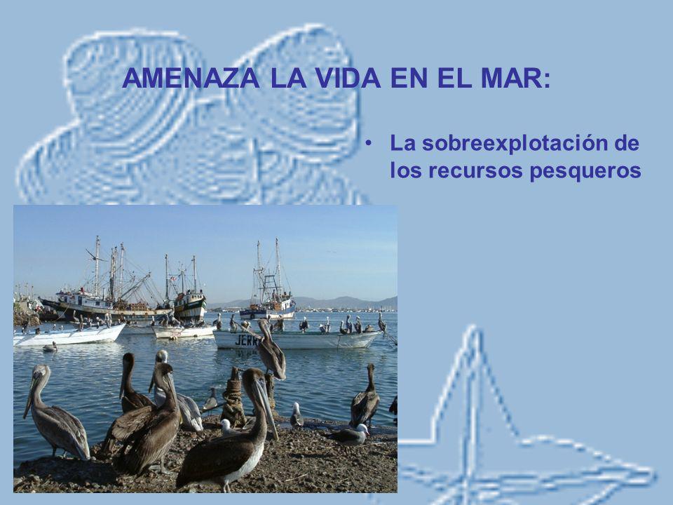 AMENAZA LA VIDA EN EL MAR: La sobreexplotación de los recursos pesqueros