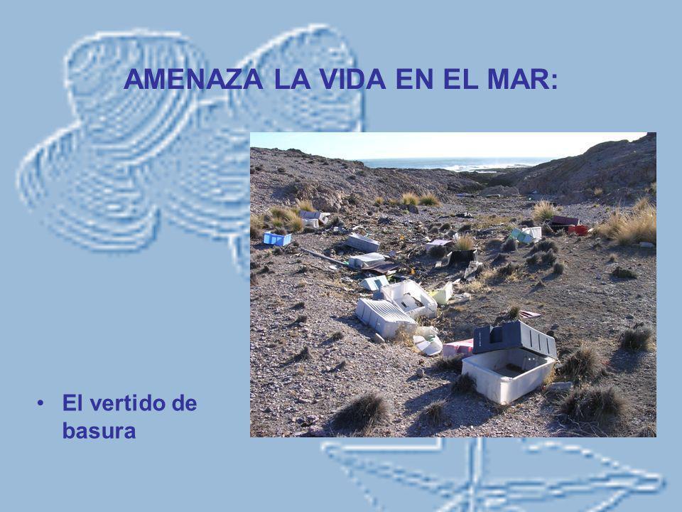 AMENAZA LA VIDA EN EL MAR: El vertido de basura