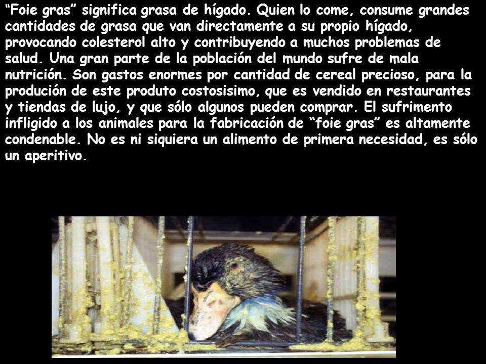Foie gras significa grasa de hígado. Quien lo come, consume grandes cantidades de grasa que van directamente a su propio hígado, provocando colesterol