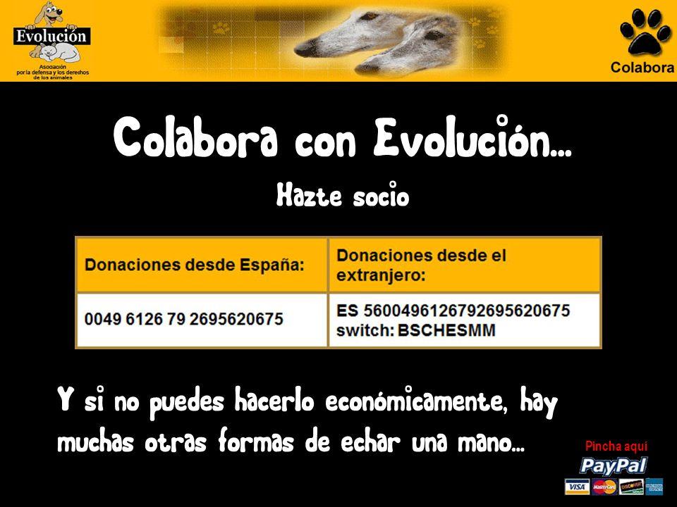 Evolución… Miles de perros y gatos son abandonados diariamente en la calle.