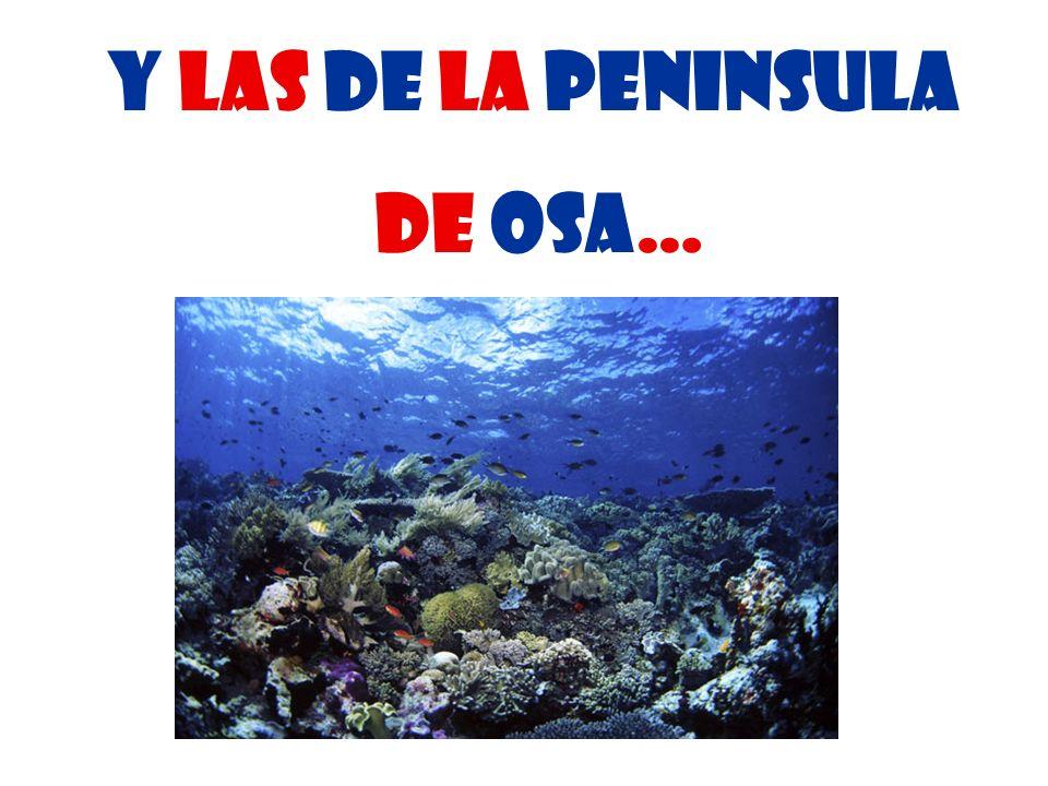 Y Las de La peninsula de osa…