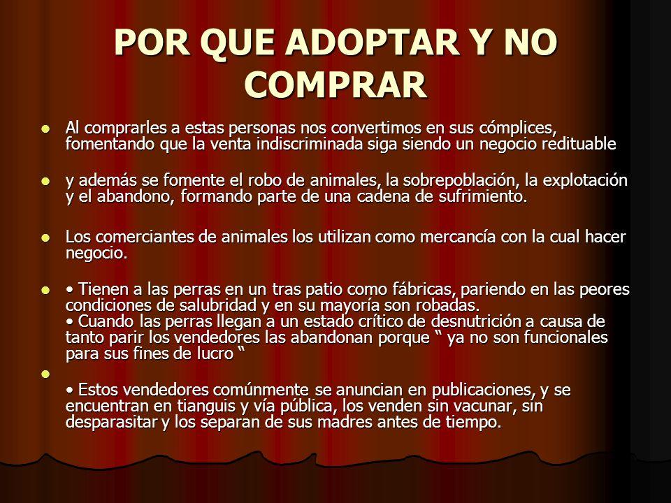 NO COMPRES-MEJOR ADOPTA Buenas razones para adoptar una mascota ¿Estás pensando seriamente en adoptar una mascota.