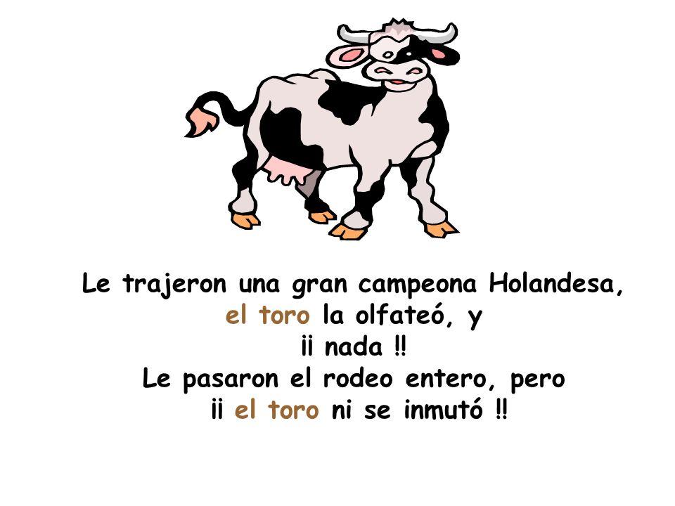 Le trajeron una gran campeona Holandesa, el toro la olfateó, y ¡¡ nada !! Le pasaron el rodeo entero, pero ¡¡ el toro ni se inmutó !!