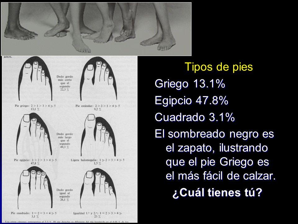 Tipos de pies Griego 13.1% Egipcio 47.8% Cuadrado 3.1% El sombreado negro es el zapato, ilustrando que el pie Griego es el más fácil de calzar.