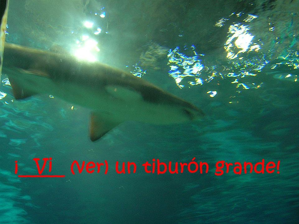 ¡_____ (ver) un tiburón grande! Vi