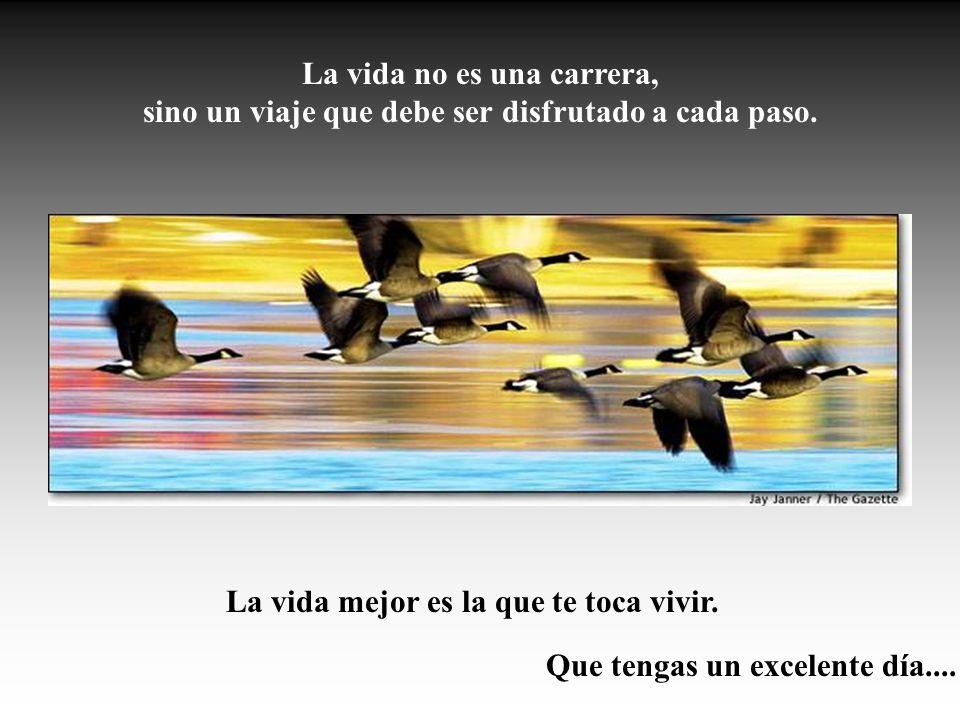 La vida no es una carrera, sino un viaje que debe ser disfrutado a cada paso. La vida mejor es la que te toca vivir. Que tengas un excelente día....