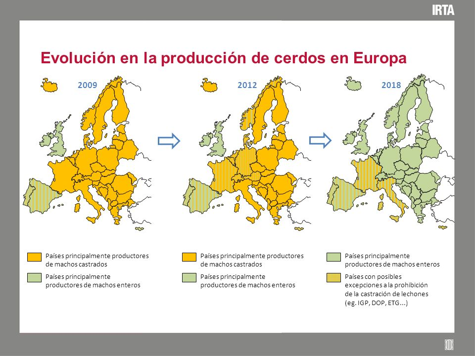 Evolución en la producción de cerdos en Europa 2009 2012 2018 Países principalmente productores de machos castrados Países principalmente productores