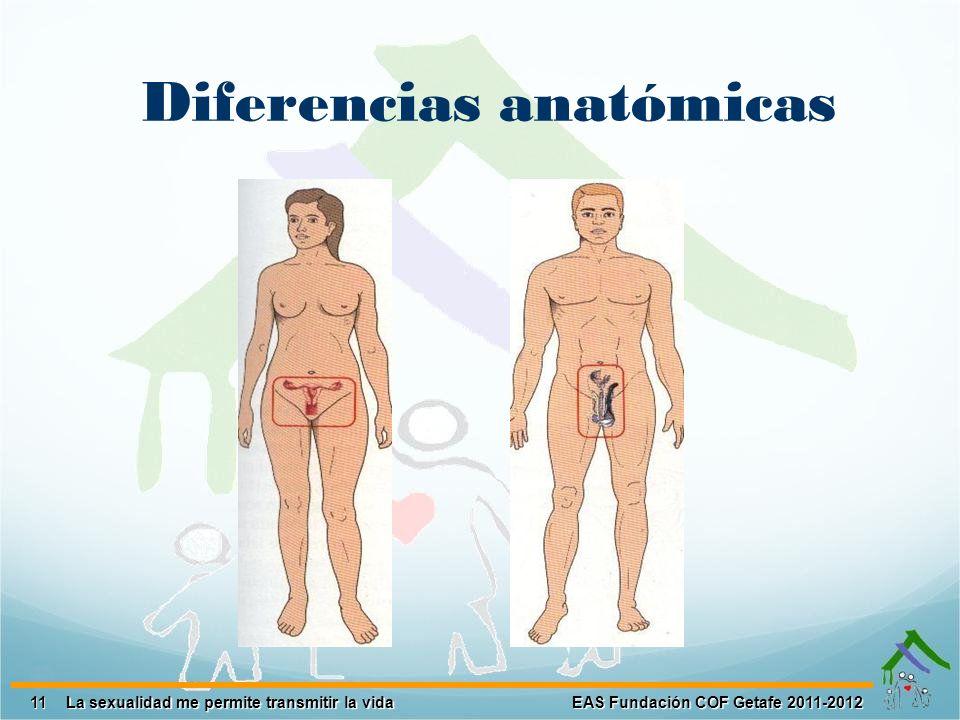 11 EAS Fundación COF Getafe 2011-2012 La sexualidad me permite transmitir la vida Diferencias anatómicas