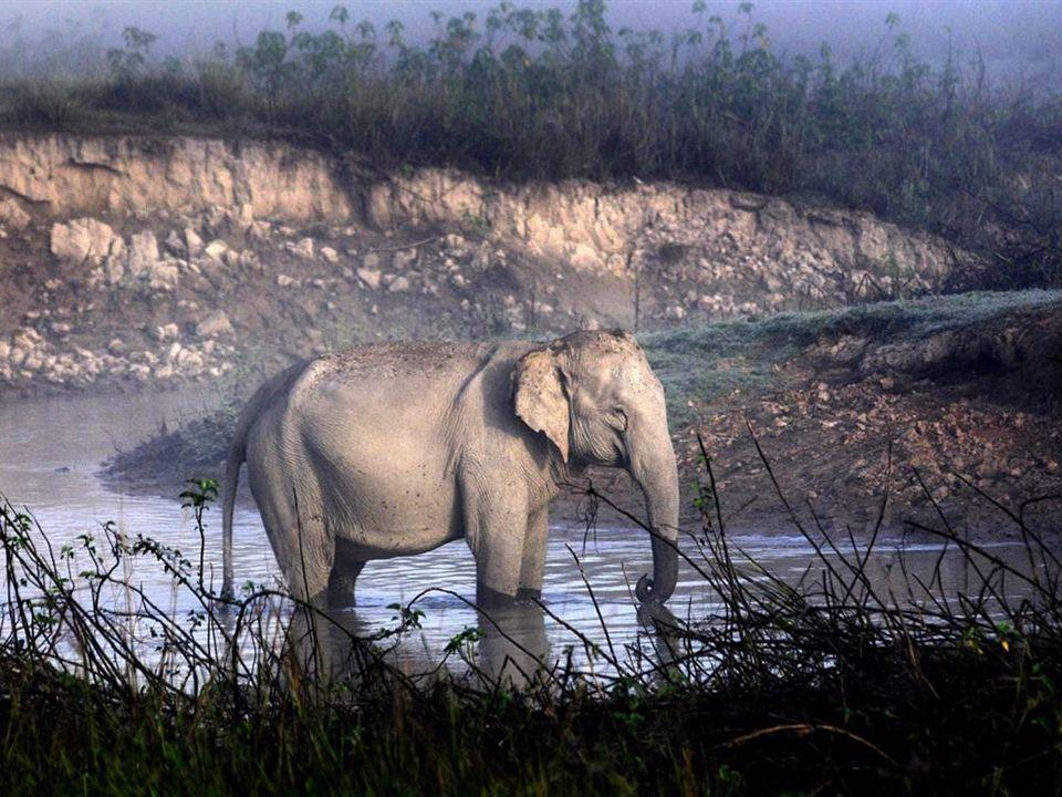 Lawrence Anthony, una leyenda de Sudáfrica y autor de 3 libros, incluyendo el Best-Seller, The Elephant Whisperer, rescató valerosamente a animales salvajes y rehabilitó elefantes de todo el mundo de las atrocidades humanas incluyendo el valiente rescate de los animales del Zoológico de Bagdad durante la invasión norteamericana de 2003.
