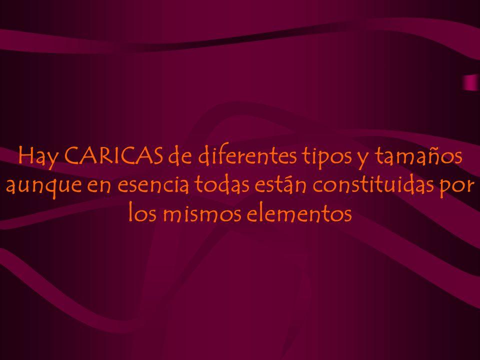 Hay CARICAS de diferentes tipos y tamaños aunque en esencia todas están constituidas por los mismos elementos