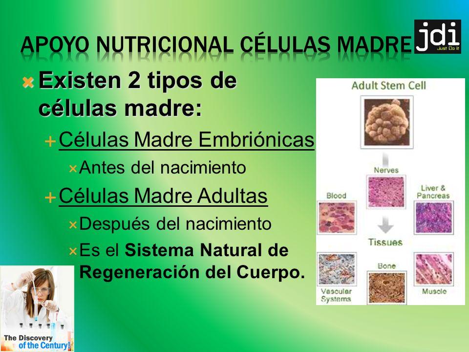 Existen 2 tipos de células madre: Existen 2 tipos de células madre: Células Madre Embriónicas Antes del nacimiento Células Madre Adultas Después del nacimiento Es el Sistema Natural de Regeneración del Cuerpo.