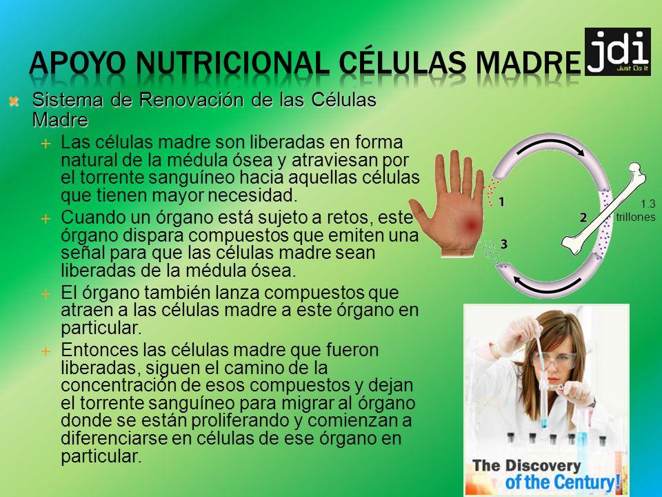 Sistema de Renovación de las Células Madre Sistema de Renovación de las Células Madre Las células madre son liberadas en forma natural de la médula ósea y atraviesan por el torrente sanguíneo hacia aquellas células que tienen mayor necesidad.