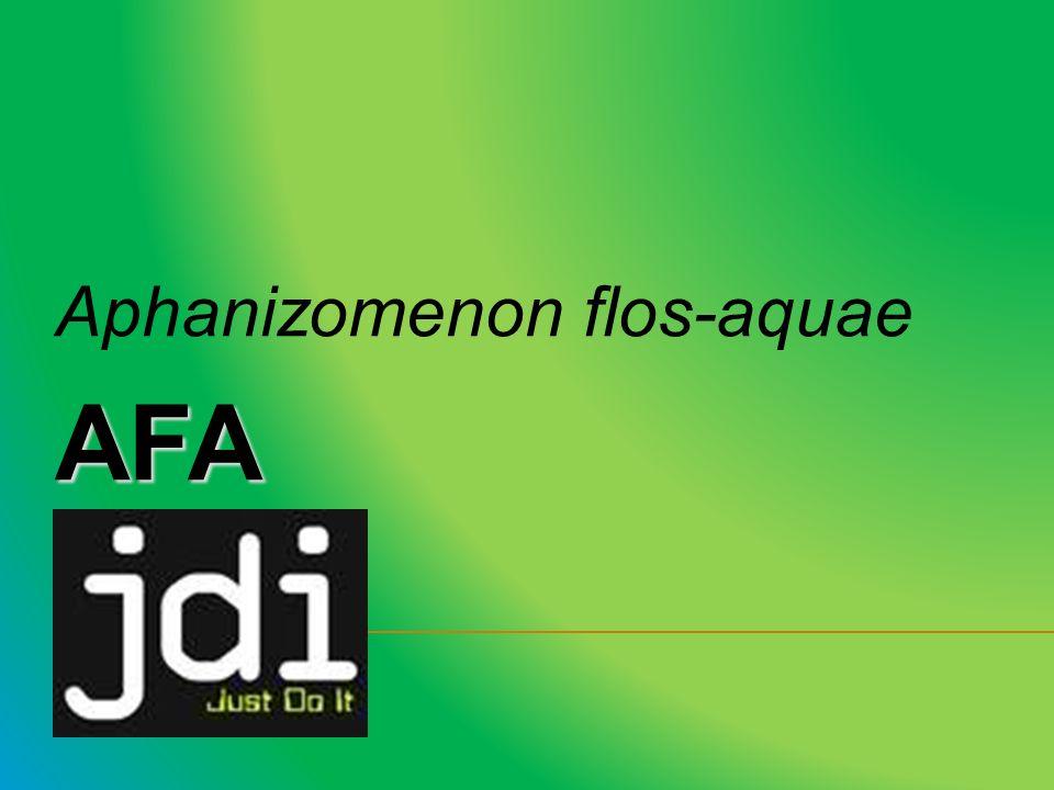 Aphanizomenon flos-aquaeAFA