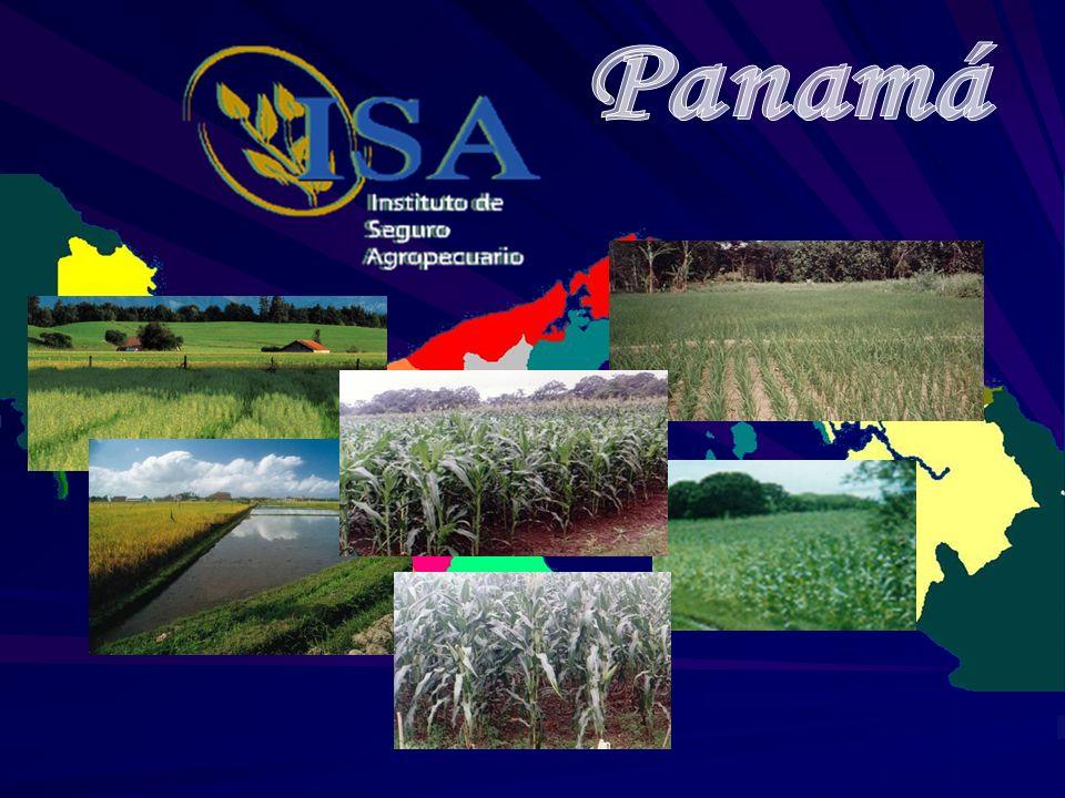 El seguro agrícola en Panamá se estableció en el año 1976 iniciándose con los programas de maíz, sorgo y arroz.