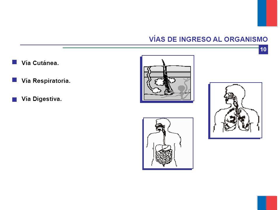10 VÍAS DE INGRESO AL ORGANISMO Vía Cutánea. Vía Respiratoria. Vía Digestiva. Módulo Manejo Seguro de Plaguicidas