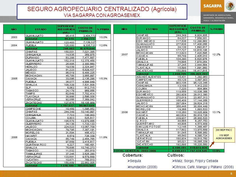Programa de Atención a Contingencias Climatológicas 5 Cobertura: Sequía Inundación (2008) Cultivos: Maíz, Sorgo, Frijol y Cebada Cítricos, Café, Mango y Plátano (2008) SEGURO AGROPECUARIO CENTRALIZADO (Agrícola) VIA SAGARPA CON AGROASEMEX 300 MDP PACC 119 MDP AGROASEMEX