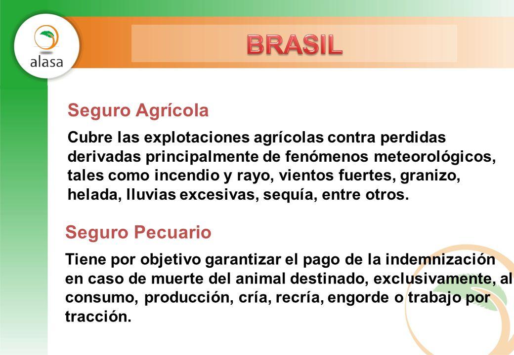 Seguro Agrícola Cubre las explotaciones agrícolas contra perdidas derivadas principalmente de fenómenos meteorológicos, tales como incendio y rayo, vi