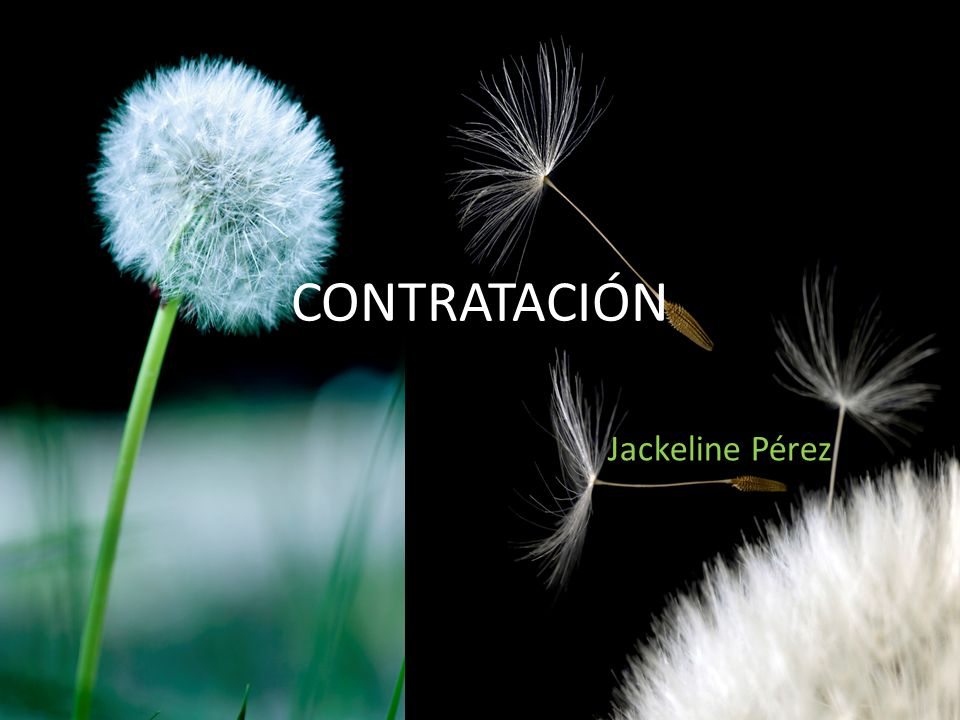 CONTRATACIÓN Jackeline Pérez