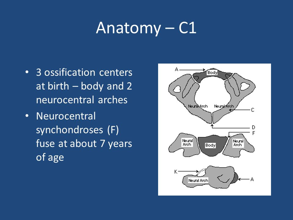 Anatomy – C1 3 ossification centers at birth – body and 2 neurocentral arches Neurocentral synchondroses (F) fuse at about 7 years of age
