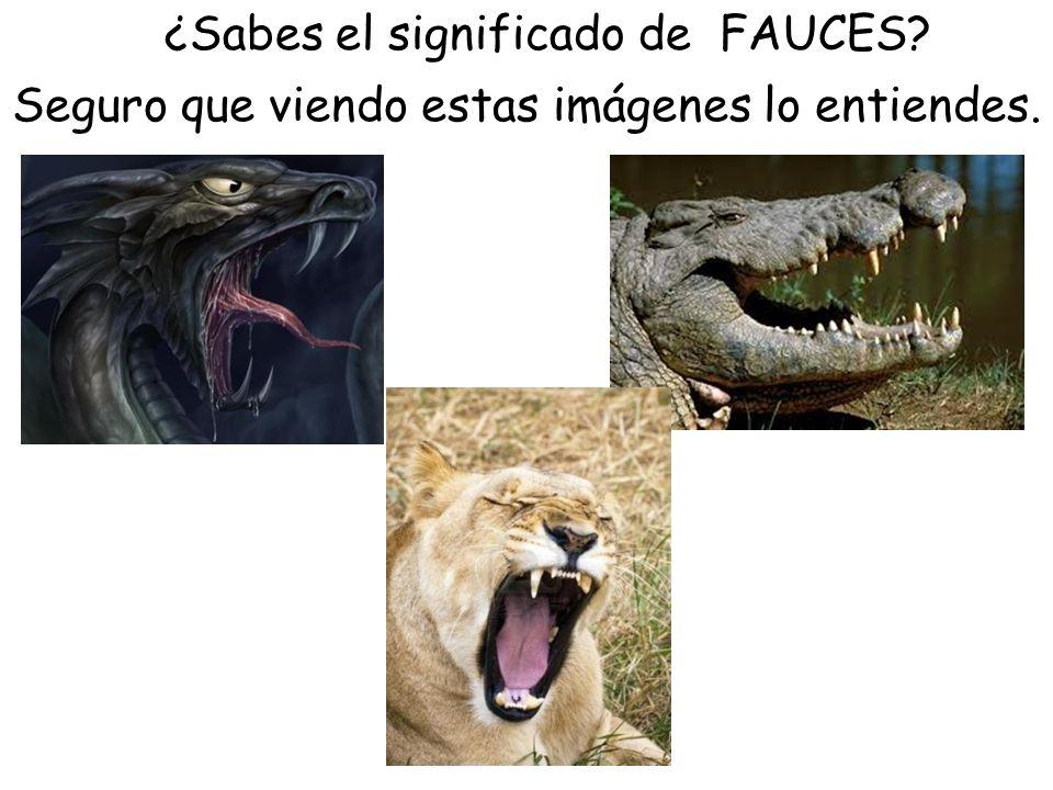 ¿Sabes el significado de FAUCES? Seguro que viendo estas imágenes lo entiendes.