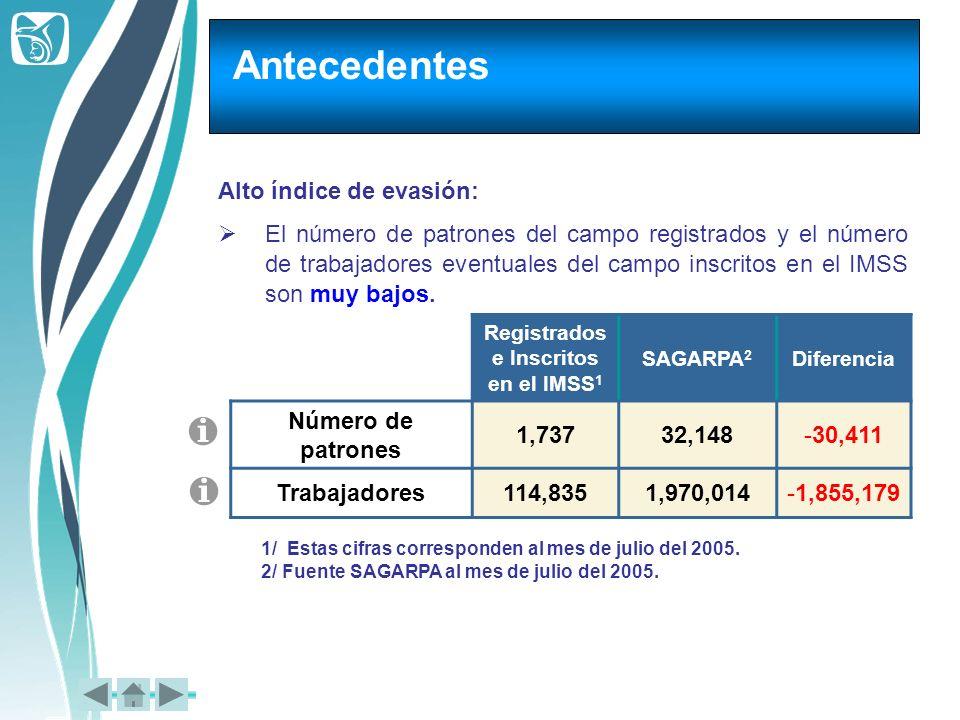 Alto índice de evasión: El número de patrones del campo registrados y el número de trabajadores eventuales del campo inscritos en el IMSS son muy bajo