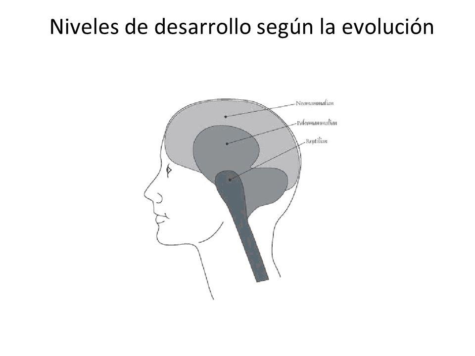 Niveles de desarrollo según la evolución