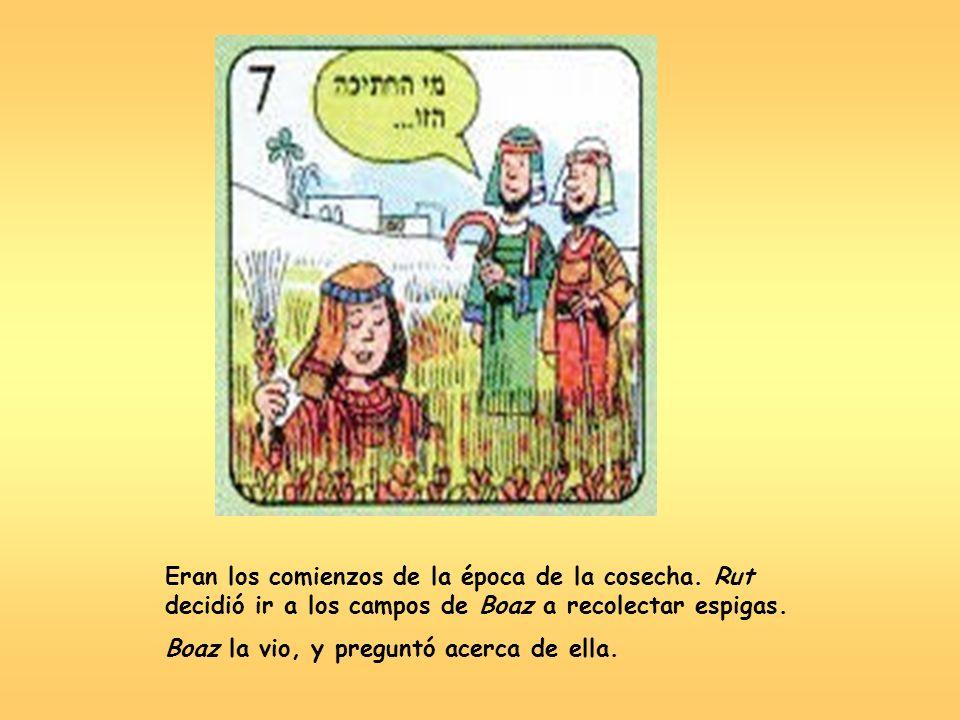 Eran los comienzos de la época de la cosecha. Rut decidió ir a los campos de Boaz a recolectar espigas. Boaz la vio, y preguntó acerca de ella.