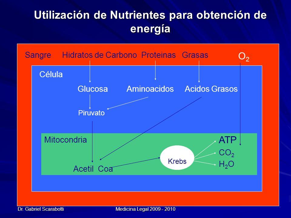 Dr. Gabriel Scarabotti UNC - ESSA - Especialización en Medicina Legal 2009 - 2010 Utilización de Nutrientes para obtención de energía Sangre Hidratos