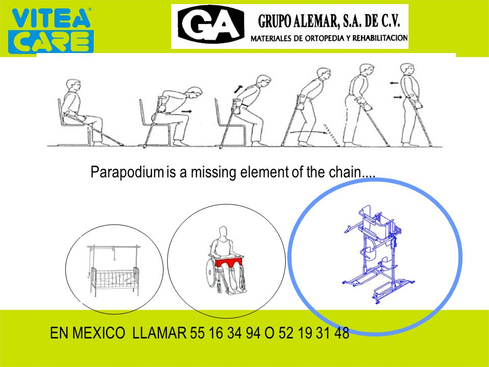 Parapodium is a missing element of the chain.... EN MEXICO LLAMAR 55 16 34 94 O 52 19 31 48