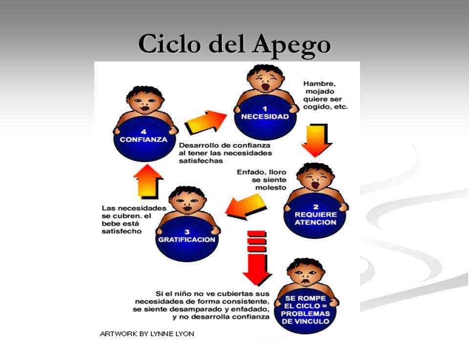 Ciclo del Apego