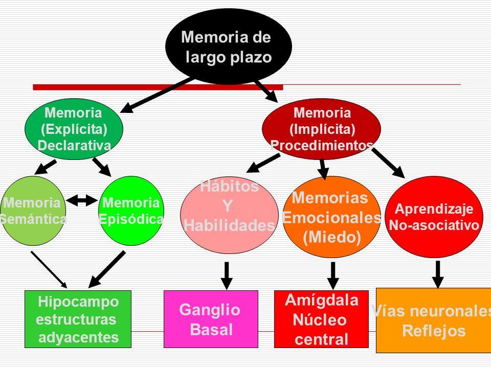 Memoria de largo plazo Memoria (Explícita) Declarativa Memoria (Implícita) Procedimientos Memoria Semántica Memoria Episódica Hábitos Y Habilidades Me