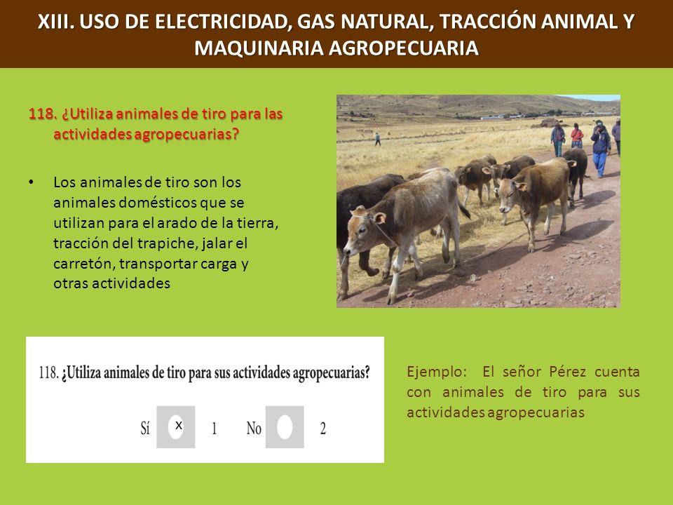 XIII. USO DE ELECTRICIDAD, GAS NATURAL, TRACCIÓN ANIMAL Y MAQUINARIA AGROPECUARIA 118. ¿Utiliza animales de tiro para las actividades agropecuarias? L