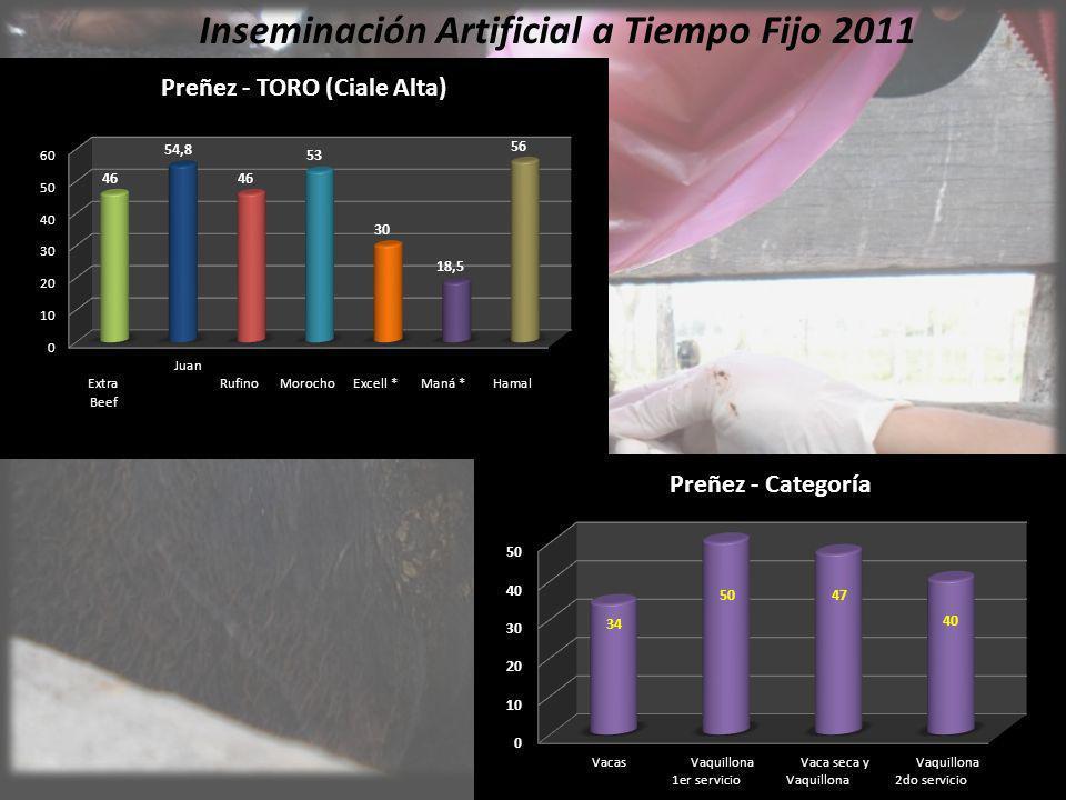 Inseminación Artificial a Tiempo Fijo 2011
