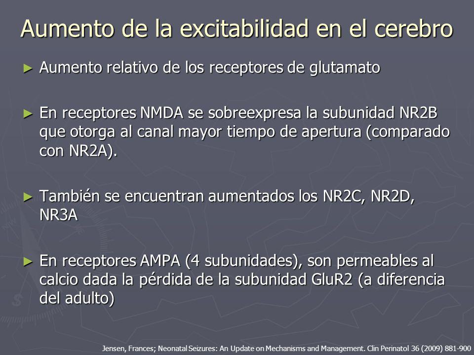 Aumento de la excitabilidad en el cerebro Aumento relativo de los receptores de glutamato Aumento relativo de los receptores de glutamato En receptore