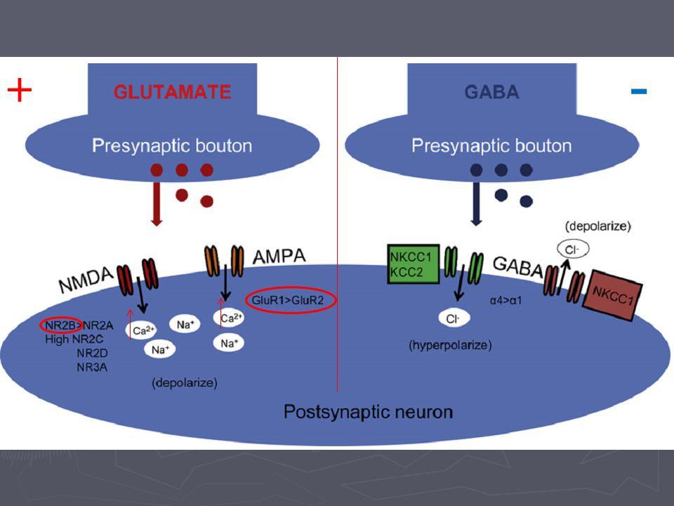 Disminución de la eficacia de la neurotransmisión inhibitoria Hay disminución de actividad gabaérgica por modificaciónes a nivel de receptores, y síntesis de neurotransmisor Hay disminución de actividad gabaérgica por modificaciónes a nivel de receptores, y síntesis de neurotransmisor Mayor expresión de subunidades α-4 y α-2, lo que las hace menos sensible a las BDZ (comparada con α-1) Mayor expresión de subunidades α-4 y α-2, lo que las hace menos sensible a las BDZ (comparada con α-1) Gradiente de cloro es inverso en el cerebro inmaduro dada la baja expresión de transportador de cloro KCC2, depolarización más que hiperpolarización Gradiente de cloro es inverso en el cerebro inmaduro dada la baja expresión de transportador de cloro KCC2, depolarización más que hiperpolarización
