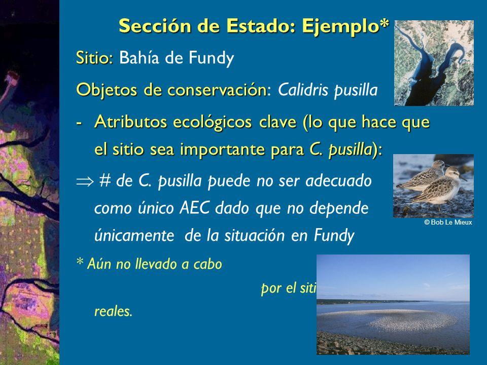 Sitio: Sitio: Bahía de Fundy Objetos de conservación Objetos de conservación: Calidris pusilla -Atributos ecológicos clave (lo que hace que el sitio sea importante para C.