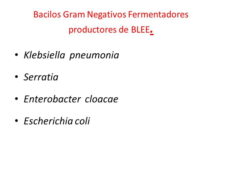 Bacilos Gram Negativos Fermentadores productores de BLEE. Klebsiella pneumonia Serratia Enterobacter cloacae Escherichia coli