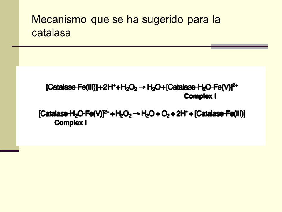 Mecanismo que se ha sugerido para la catalasa